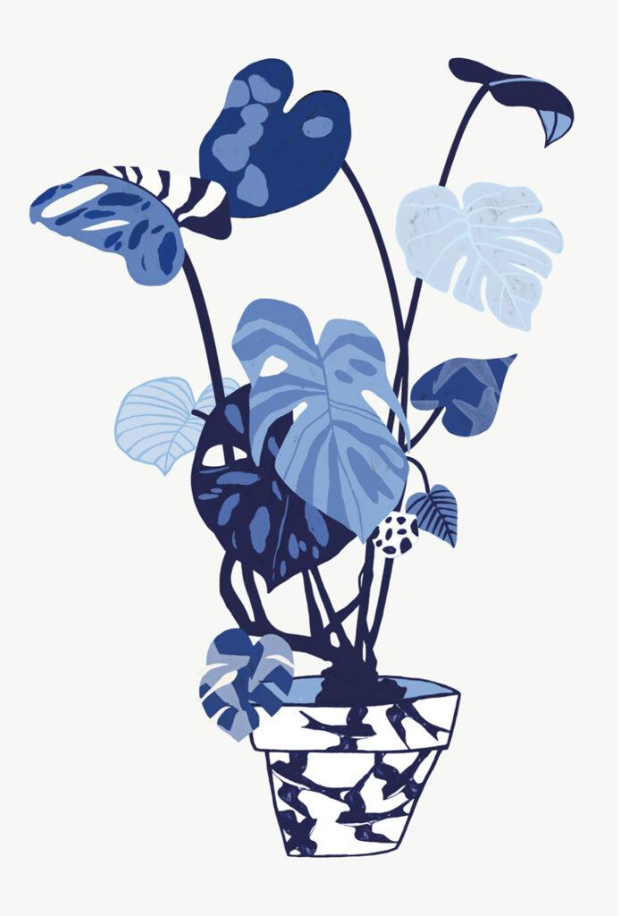 Illustration Houseplant